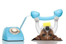 telefonhund