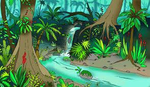 regnskov